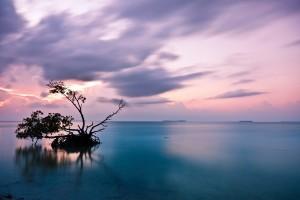 Permalink to:Everglades Tours