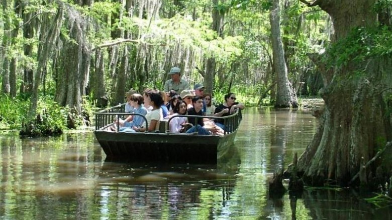 Swamp & Airboat Tours – Sightseeing Tours and Attractions